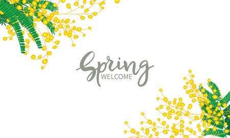 Spring welcome, lettering. Mimosa flowers bunch isolated on white background.