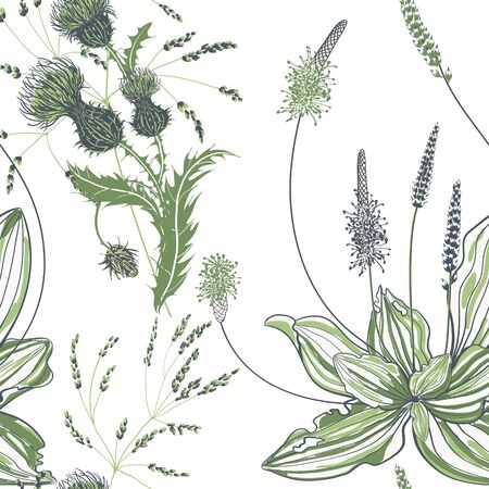 Seamless pattern of plantain with flowers and leaves on white background. Çizim