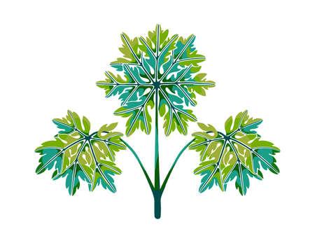 Colorful lace geranium leaves. Summer floral composition. Design elements. Hand-drawn vector