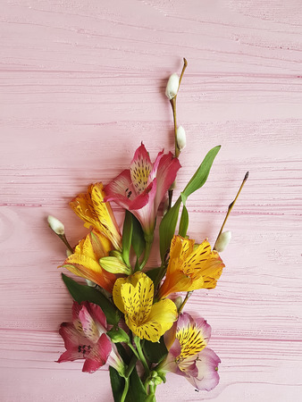 alstroemeria willow on a pink wooden background