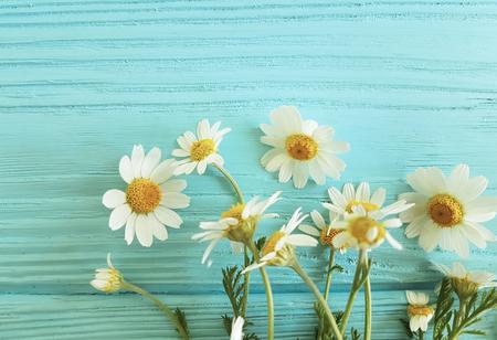 chamomile flower on blue background frame