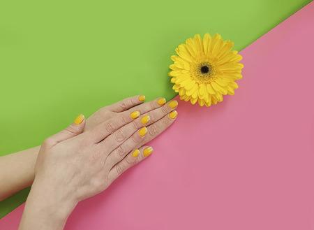 female hands manicure, gerbera flower
