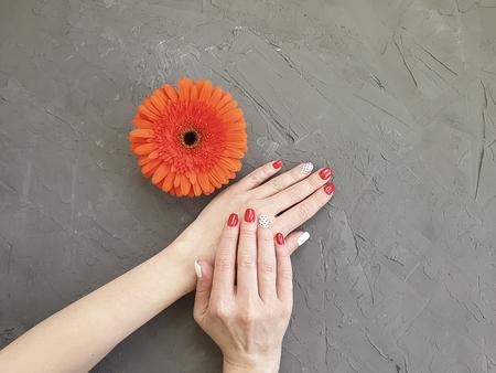 female hands, red manicure, gerbera flower on a gray concrete Stock fotó