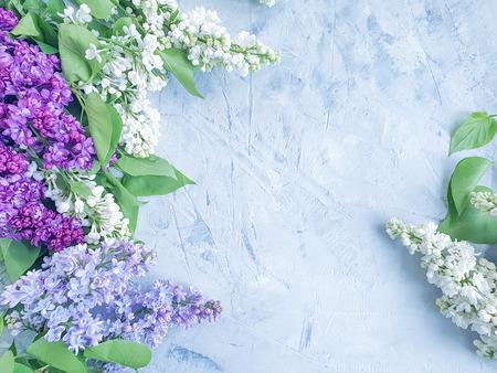 lilac flower on gray concrete background frame Reklamní fotografie - 122654002