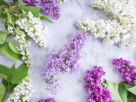 lilac flower on gray concrete background frame
