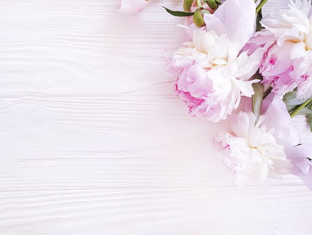 beautiful fresh flower peony over pink wooden background
