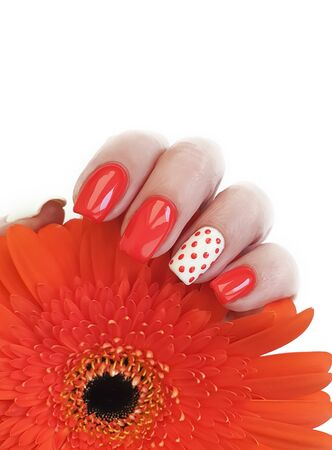 female hand beautiful manicure gerbera flower
