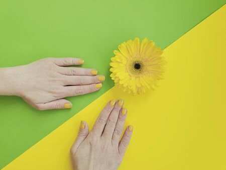 female hands manicure gerbera flower