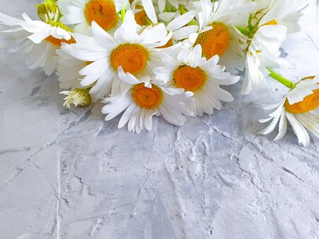 bouquet of daisies on a gray concrete Stok Fotoğraf