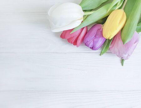 tulip flower on wooden 免版税图像