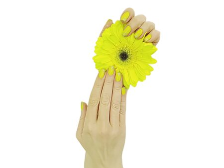female hand manicure gerbera flower isolated