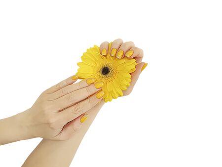 female hand manicure gerbera flower isolated Zdjęcie Seryjne - 129255621