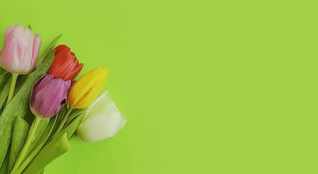flower tulip on a colored background frame Imagens