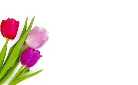 tulip bouquet on a white background frame