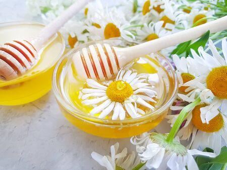 fresh honey daisy flower on concrete background