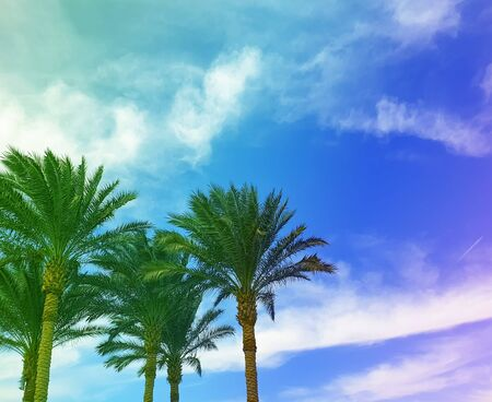 beautiful palm trees on sky background caribbean