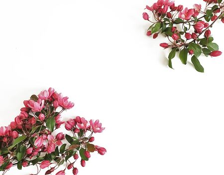beautiful flowering magnolia branch isolated