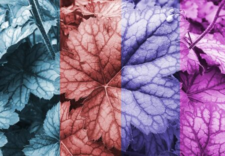 beautiful colored leaves scenery background