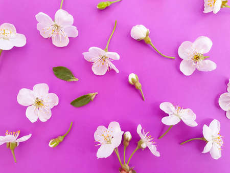 blooming cherry on a colored background Standard-Bild