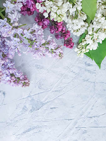 lilac flower on concrete background frame Zdjęcie Seryjne - 151733368