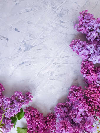 lilac flower on concrete background frame