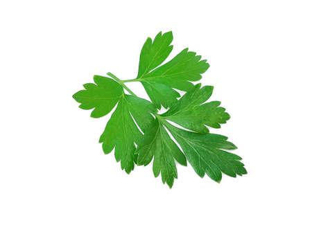 parsley leaf isolated on white background Stock fotó
