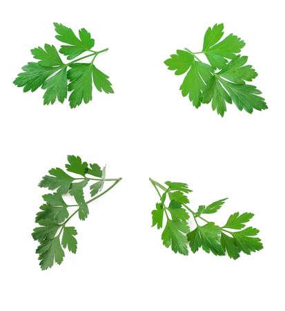 parsley leaf isolated on white background Standard-Bild