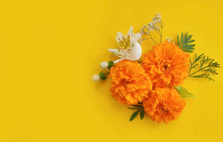 orange flowers on a colored background frame Imagens - 156247815