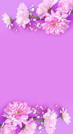 beautiful flower on a colored background, creative composition, frame