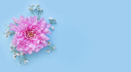 beautiful flower on a colored background, creative