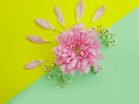 beautiful flowers composition on a colored background 写真素材
