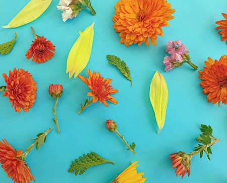 beautiful flowers on a colored background