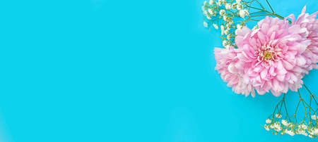 beautiful flowers on a colored background frame