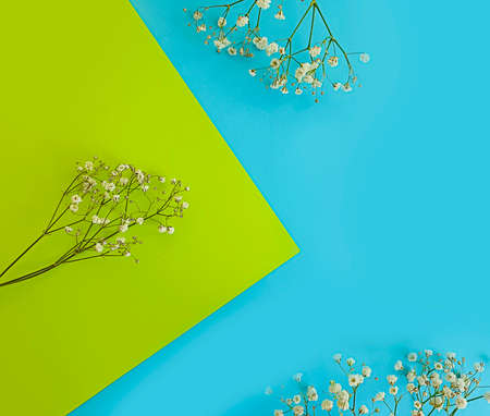gypsophila flower on a colored background decoration Imagens