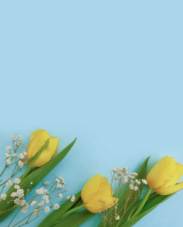 tulip flower on a colored background march