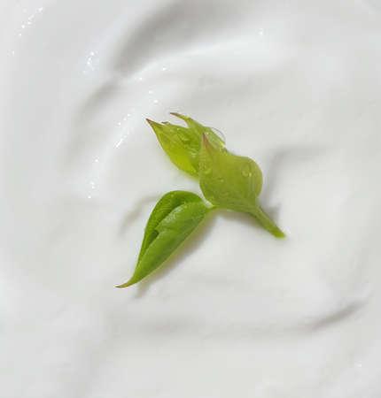 cream cosmetic green leaf background