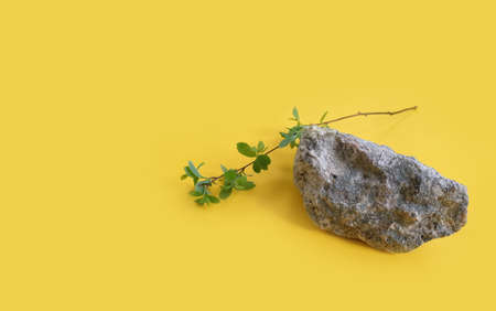 stone, branch on colored background Imagens