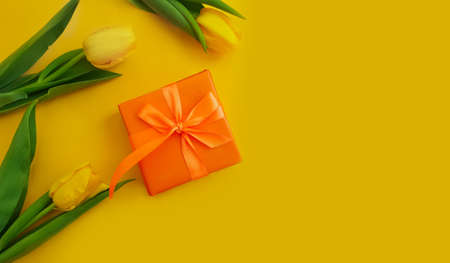 gift box flower tulip on colored background