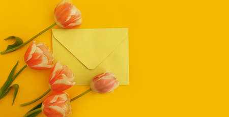 envelope, flower tulip on a colored background