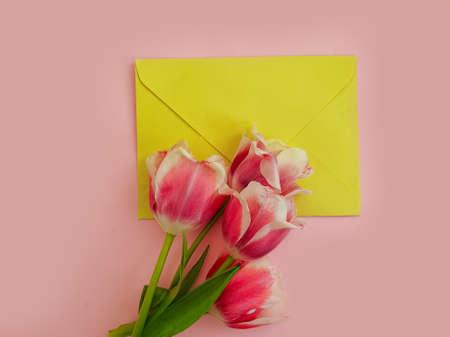 envelope flower tulip on colored background