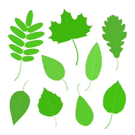 Set of green leaves of various trees Illustration