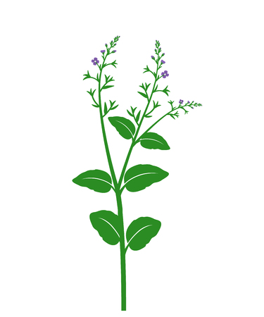 Wild flower. Botanical vector illustration with wildflowers isolated on white background.