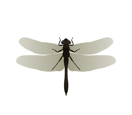 Dragonfly. Vector illustration, isolated on white background.