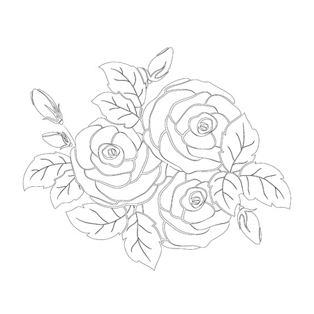 Bouquet of roses isolated on white background. Element for your design. Vector illustration.