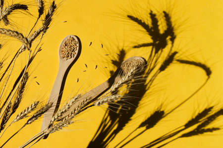 Cereal crop on a yellow background. Wooden spoons, spikelets with hard shadows. Natural raw materials for food. Copy space.