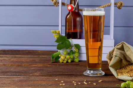 Home brewing concept. Still life with hops, beer and barley on a wooden background. Make a lager beer with natural ingredients. Copy space. 版權商用圖片
