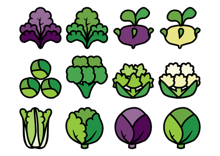 varieties: Set of colored linear icons with varieties cabbage. Stock Photo
