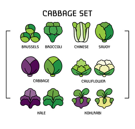 Set of colored linear icons with varieties cabbage. Ilustração