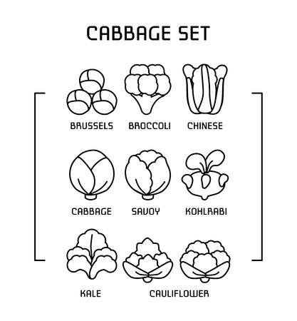 Set of linear icons with varieties cabbage. Ilustração