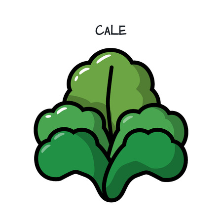 recommendations: Icon green kale cabbage on white background. Illustration with the vegetables for design food products, advertising products, environmental articles, dietary recommendations.